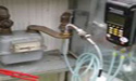 tenuta_gas